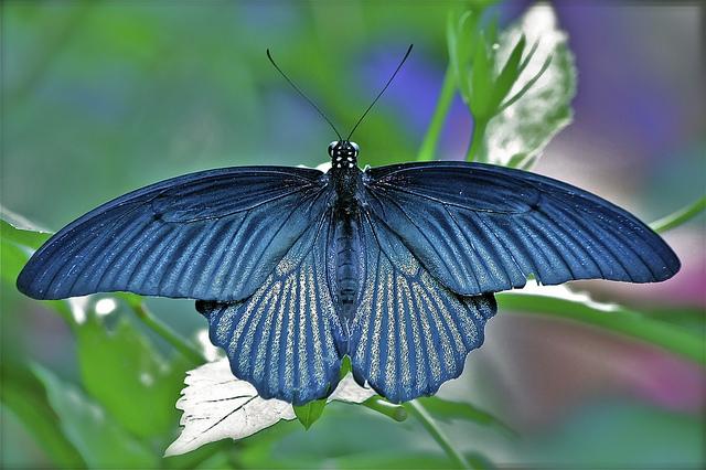 reboot butterfly