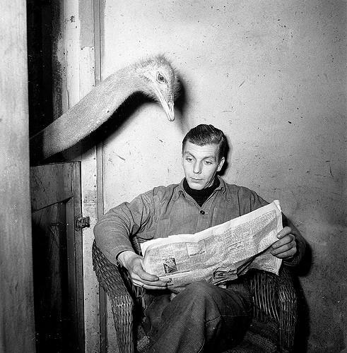 ostrich reading a newspaper